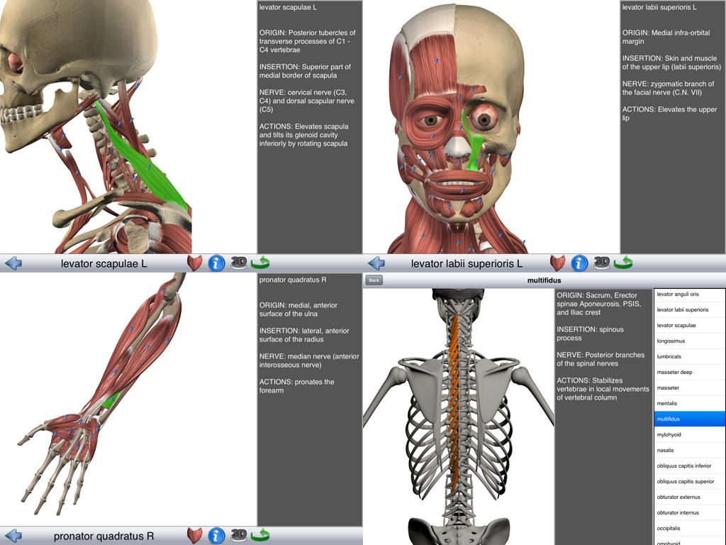 Visual_Muscles_3D_noticiasapple.es